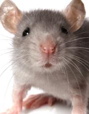 MouseFace